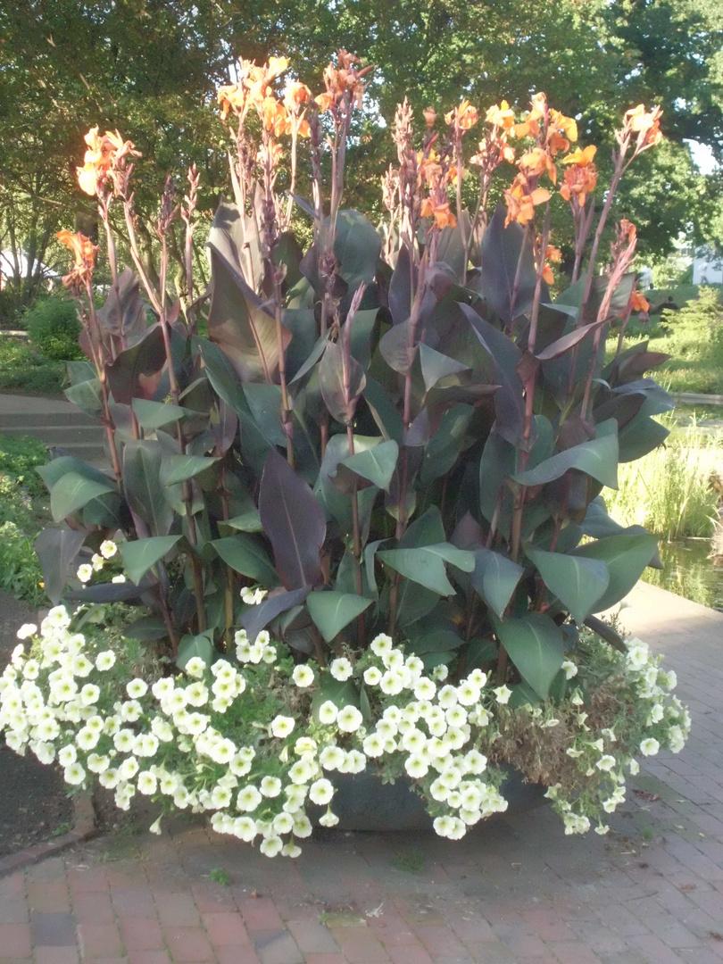 Planten & Blomen