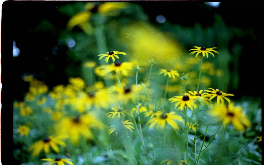 Planten un Blomen im August 3