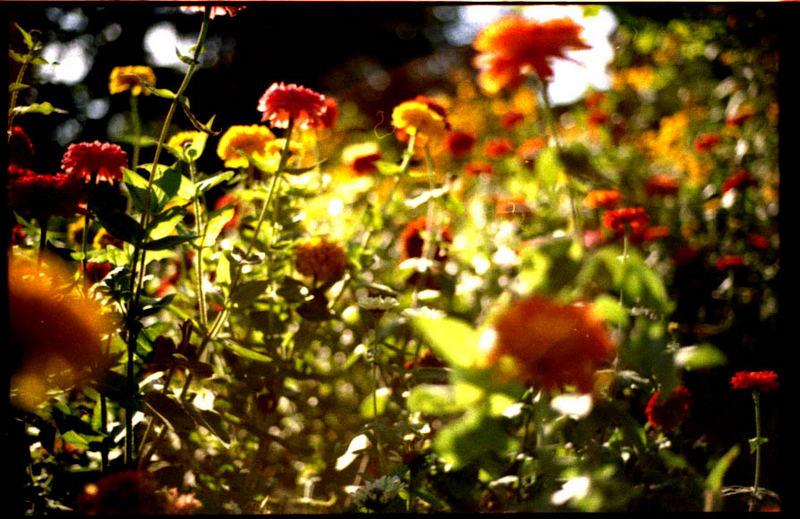 Planten un Blomen im August 4