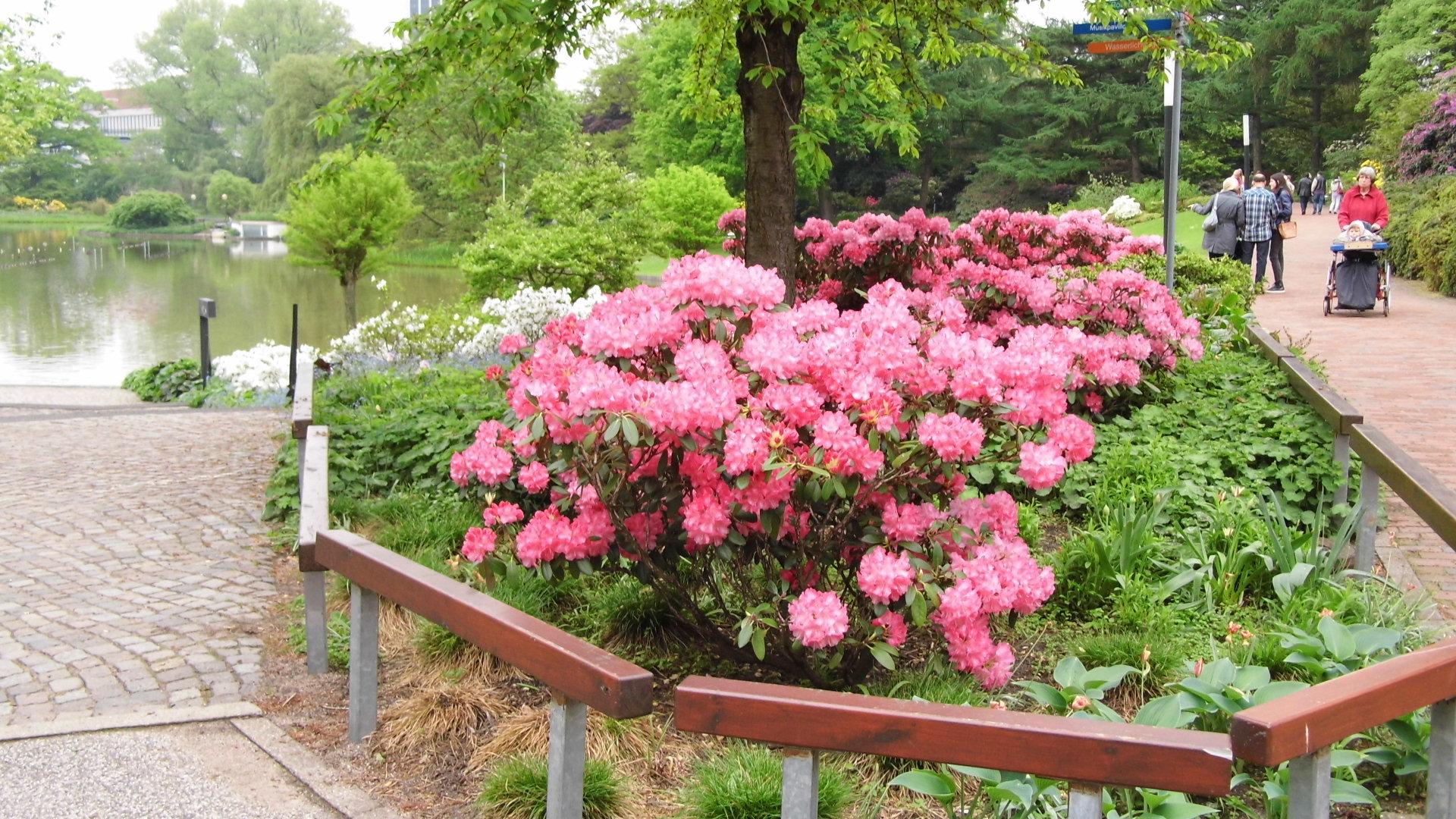 planten&bloomen