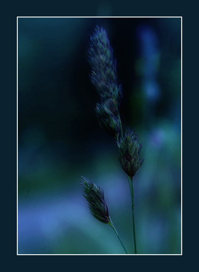 "Plants #101 ""After Twilight"""