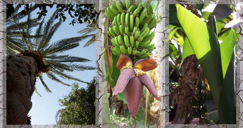 plants - egypt