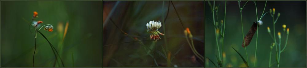 Plants IV...