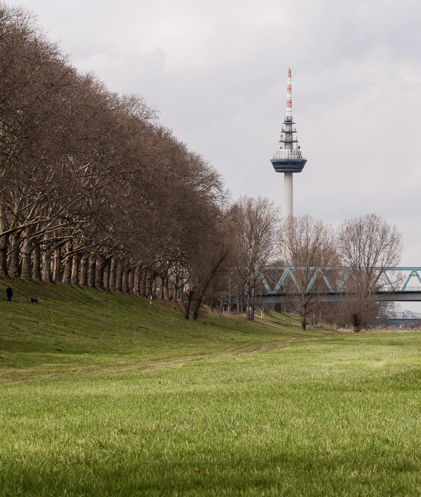 Platanen am Neckar