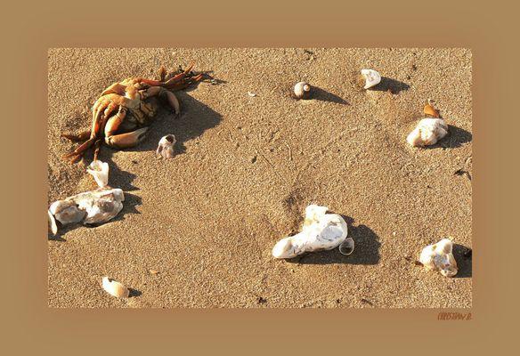 Plateau de fruits de mer...