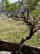 Plateau de Lassithi