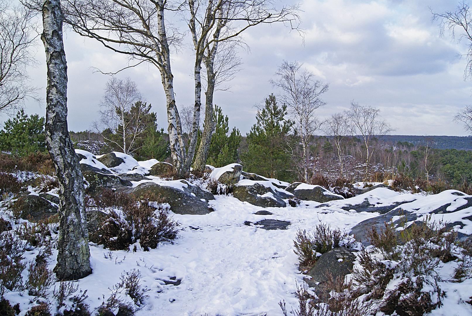 Platières à Fontainebleau