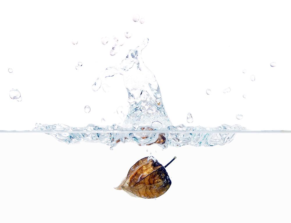 Platsch - eine Physalis im Wasser