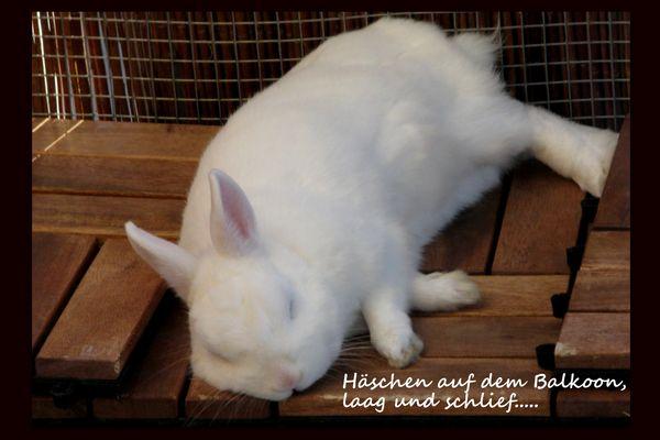 Platt wie ne Flunder ;-) oder: Das tägliche Bild aller Kaninchen Besitzer