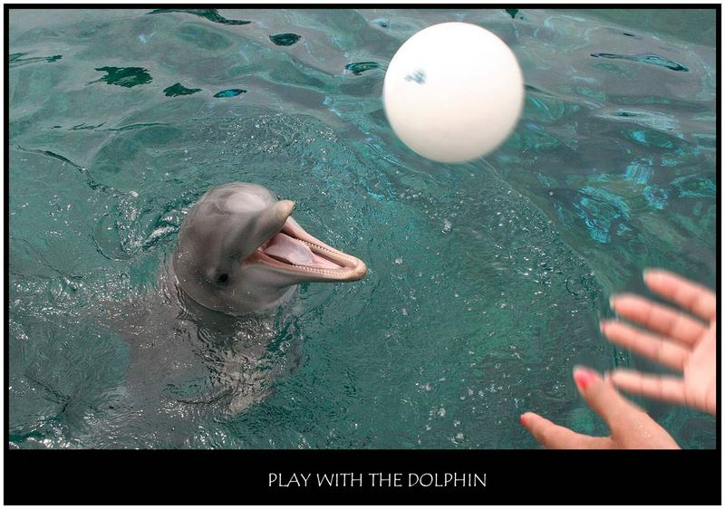 Play with the dolphin