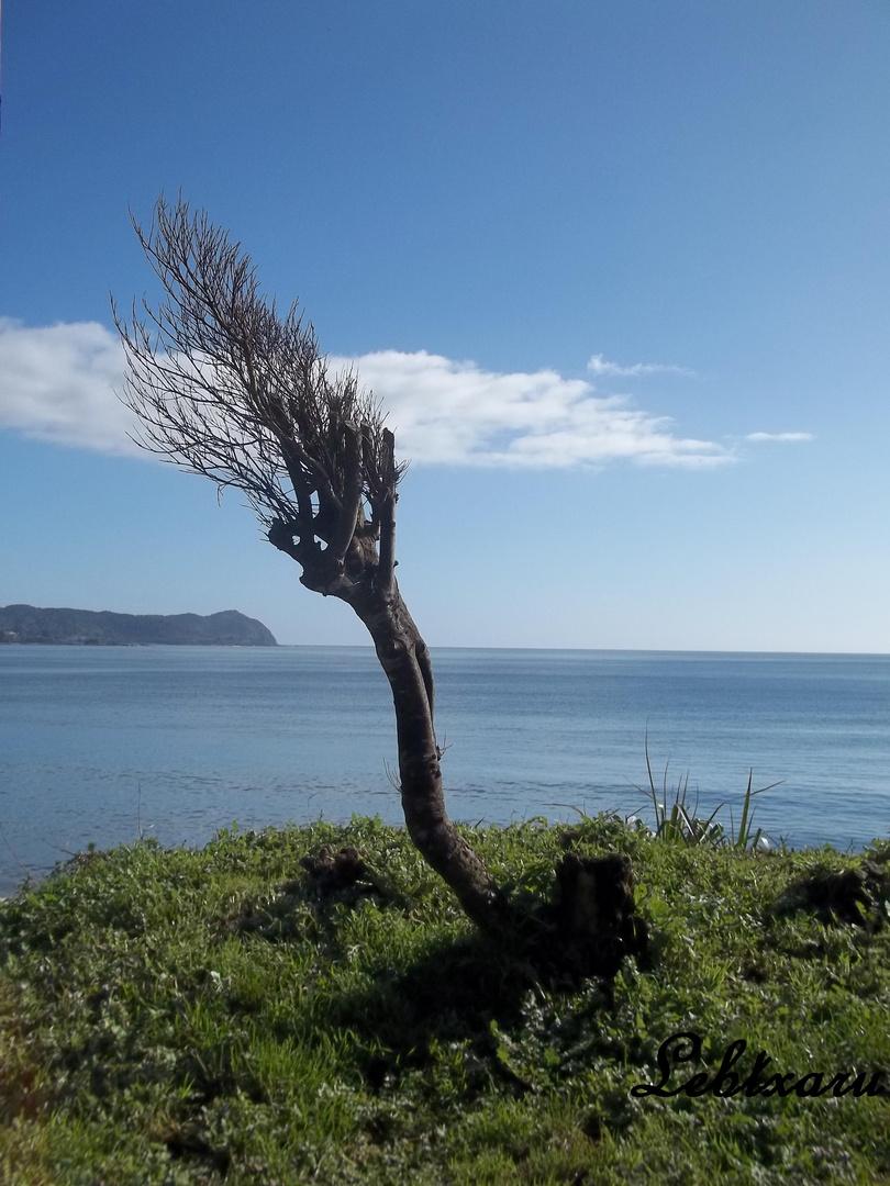 Playa grande, Niebla - Valdivia - Chile