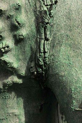 Playbaum 02 - Schamlos: für ein Foto lassen die Bäume alle Blätter sinken