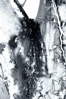 Playbaum 03 - Wesen zeigen ihre Scham