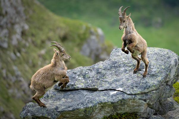 Playful Fighting