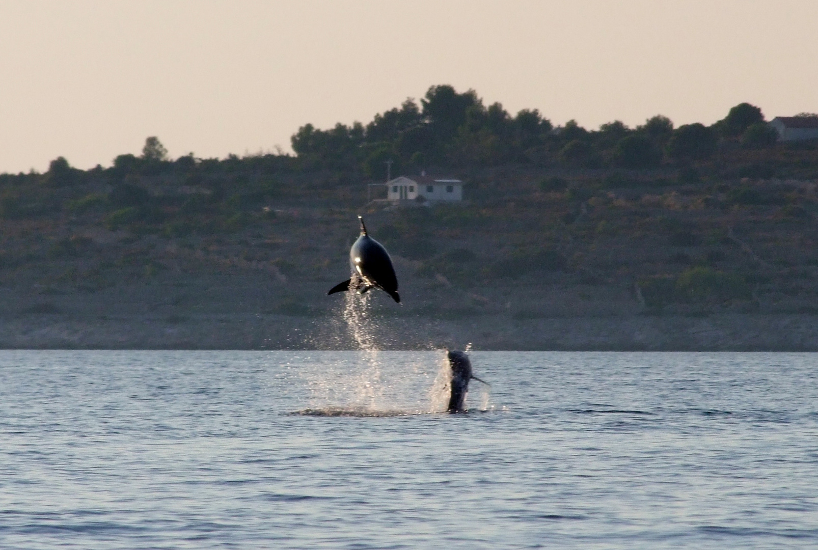 PLAYING DOLPHINS IN THE ADRIATIC SEA...