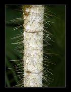 Please Don't Climb the Tree