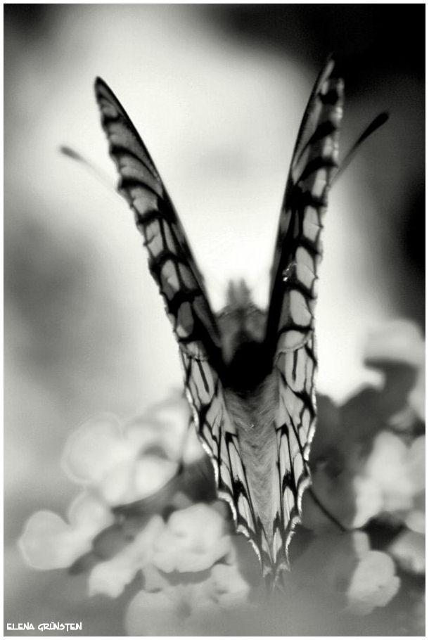 Plegando las alas