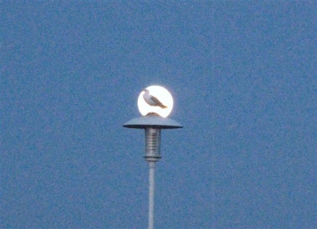 Pleine lune àCamaret sur Mer