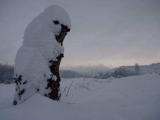 pleine neigeuse