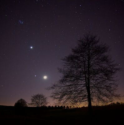 Plejaden, Venus, Jupiter, Mond, Sterne, Baum