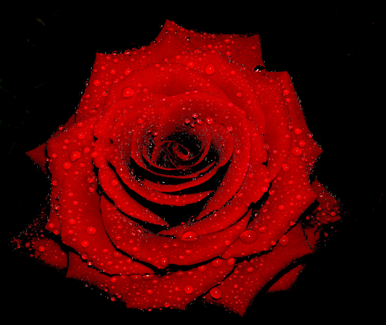 pleures pas m'am Rose