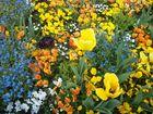 Plongée florale