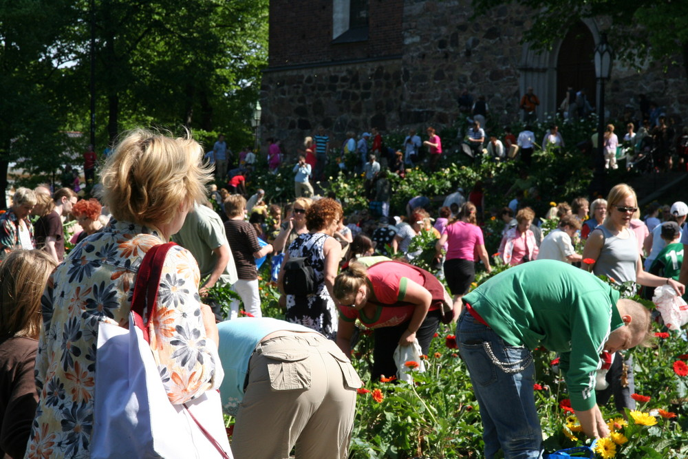 Pluenderung der Blummen am Dom zu Turku