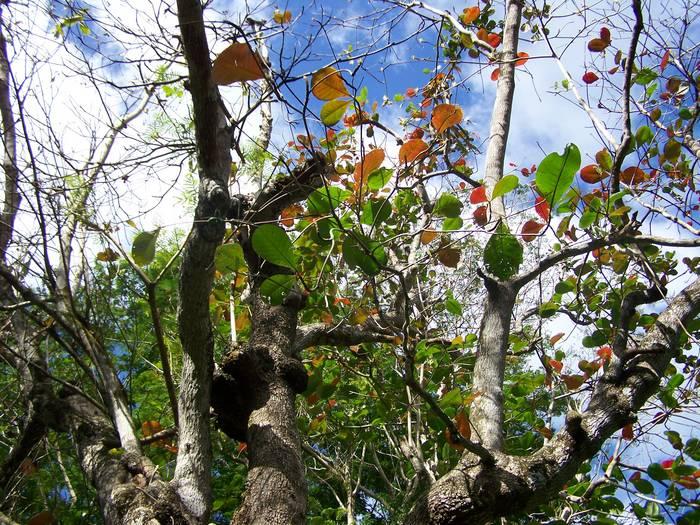 Pluie de feuilles multicolores