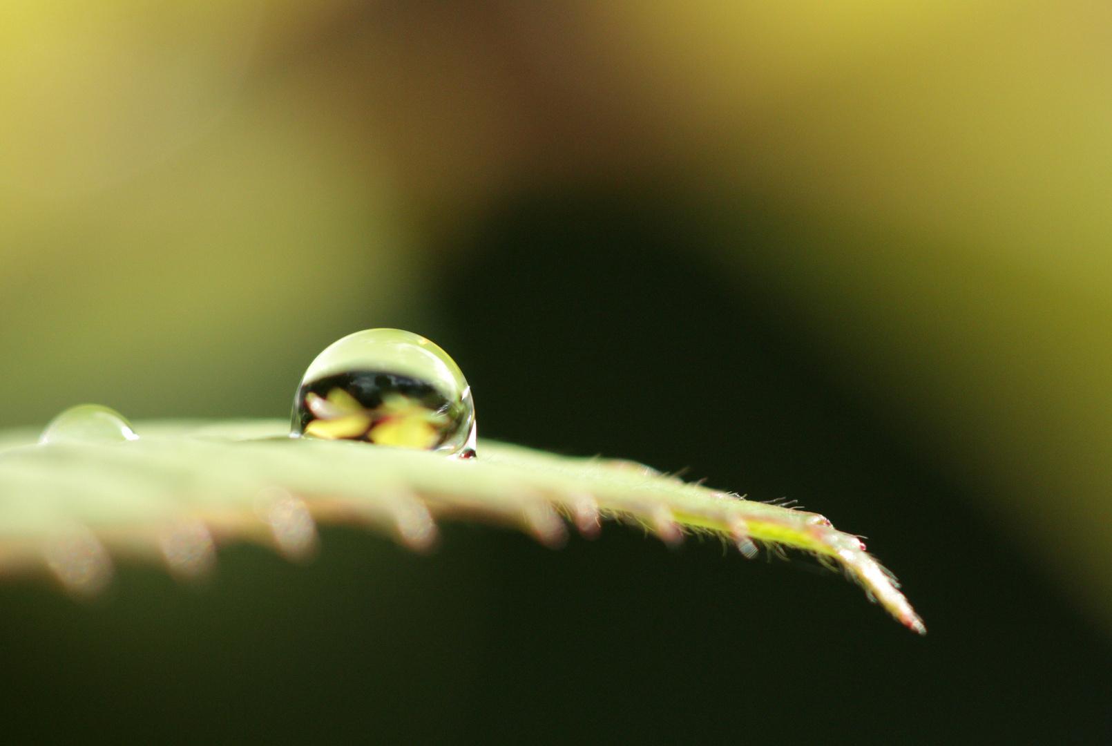 pluie matinale