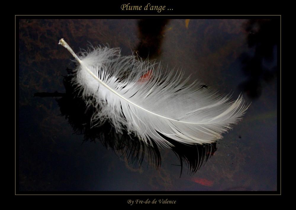 Plume d'ange ...