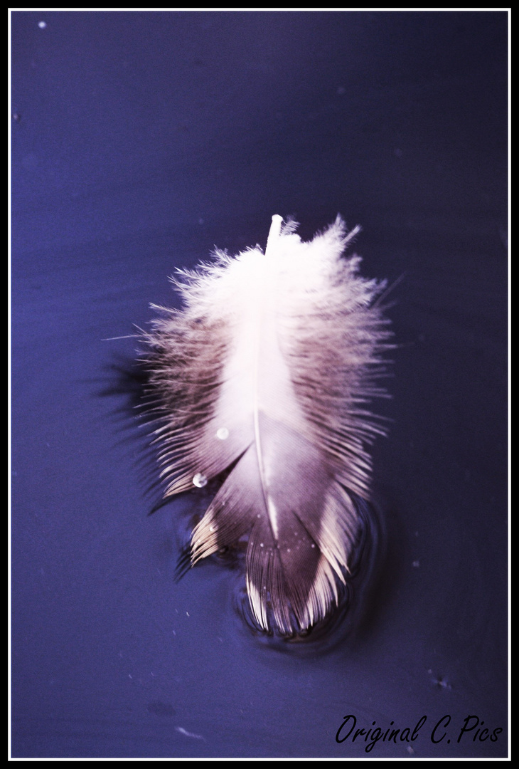 plume sur eau