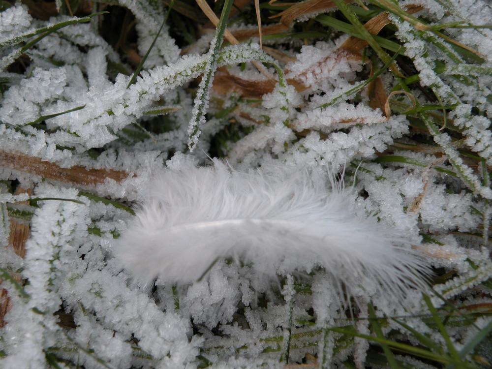 plume sur glace