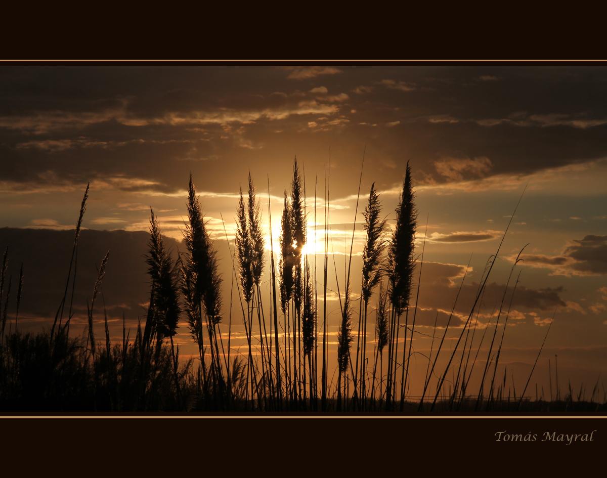 Plumeros en la Puesta de Sol
