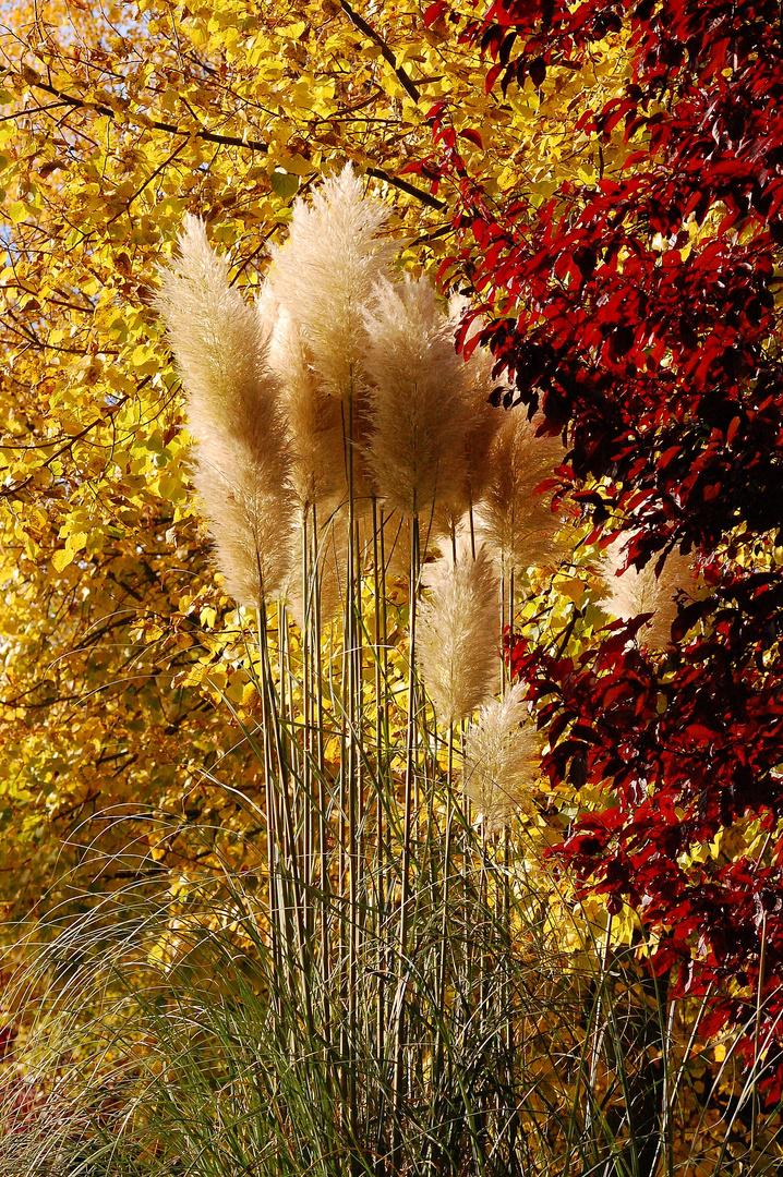 plumes d'automne