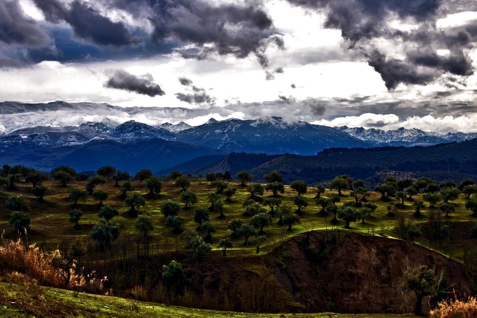 P.N. Sierra Nevada
