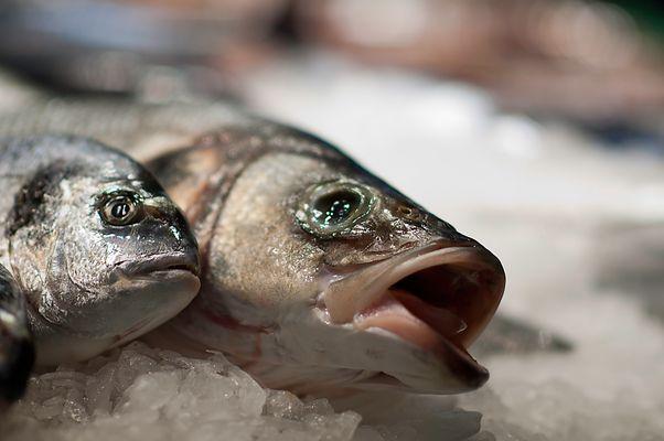 pobre pez