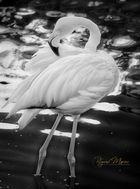 poces,romantica,aves,1