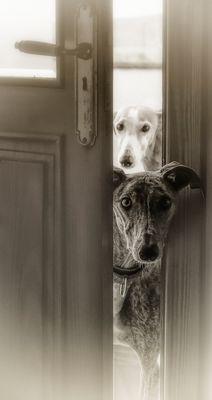 ¿Podemos entrar?