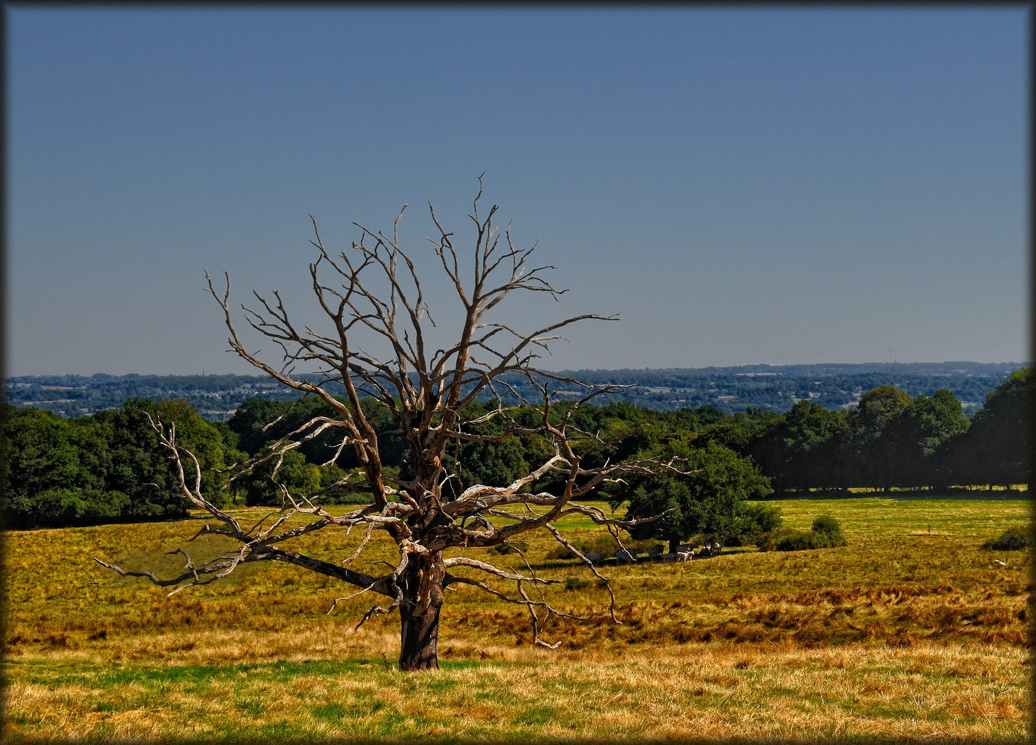 Poesie des toten Baumes - Poésie de l'arbre mort