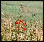 poesie - FRIEDErich - unvollENDEt - EF-07 - (para t.tj.n.m.rt.n.v.)