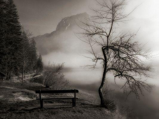 Poesie im Nebel