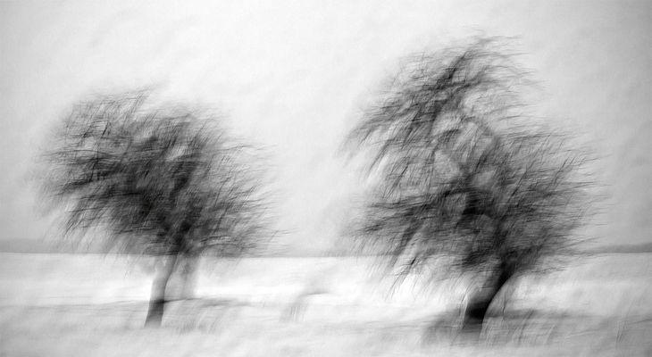 Poetic Trees