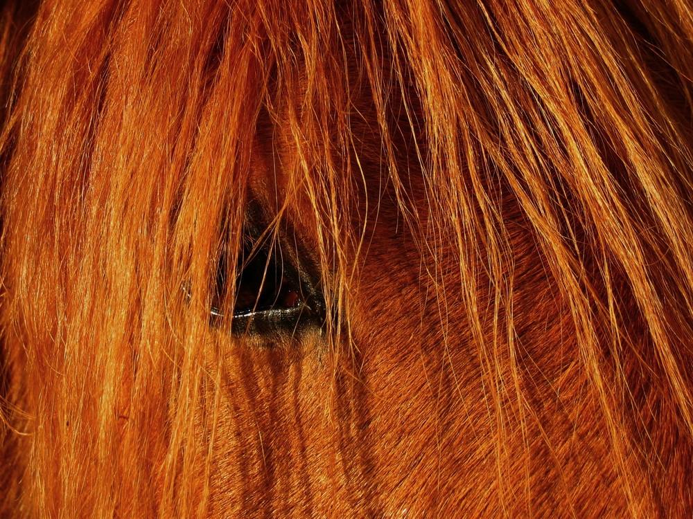 Poils de cheval