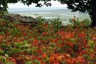 Point de vue du jardin d'Avranches