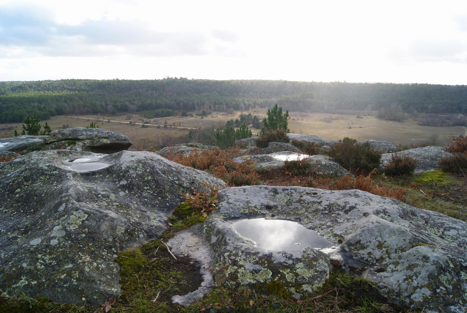 Point de vue sur la forêt de Fontainebleau