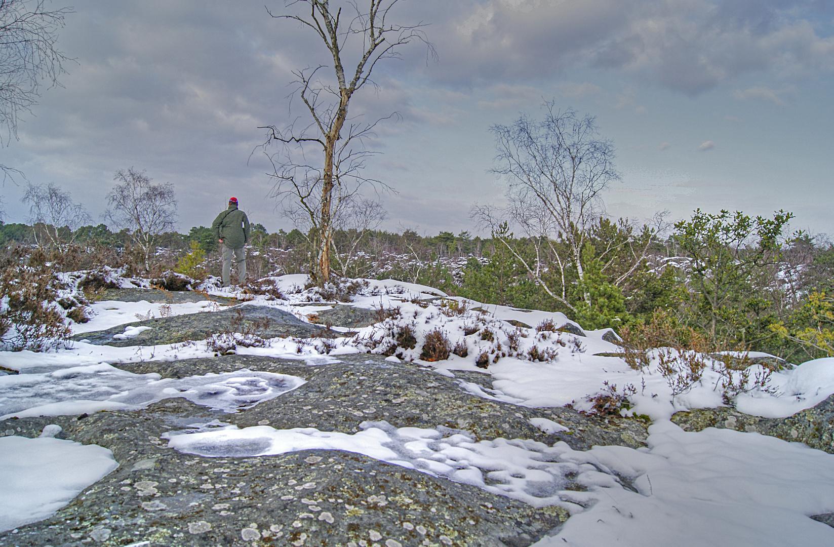 point de vue sur les gorges d'Apremont, Fontainebleau