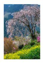 Pointillism Spring 2013 #1