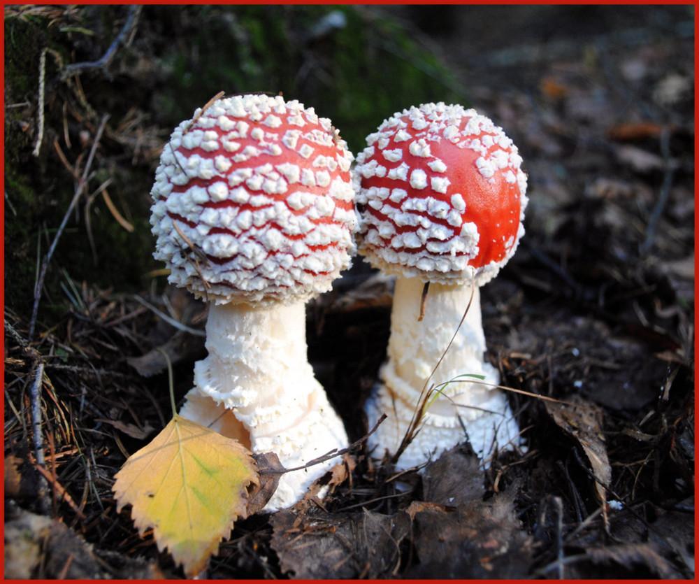 Poison Twins