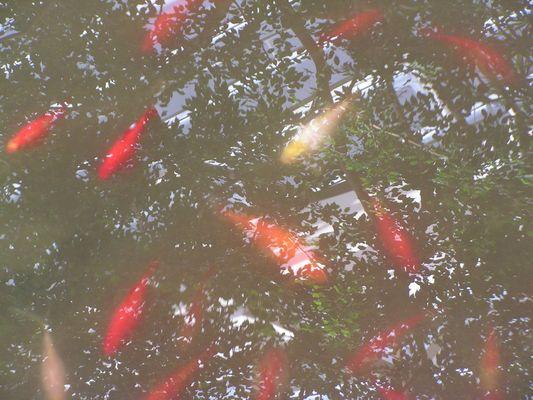 poissons dans les arbres