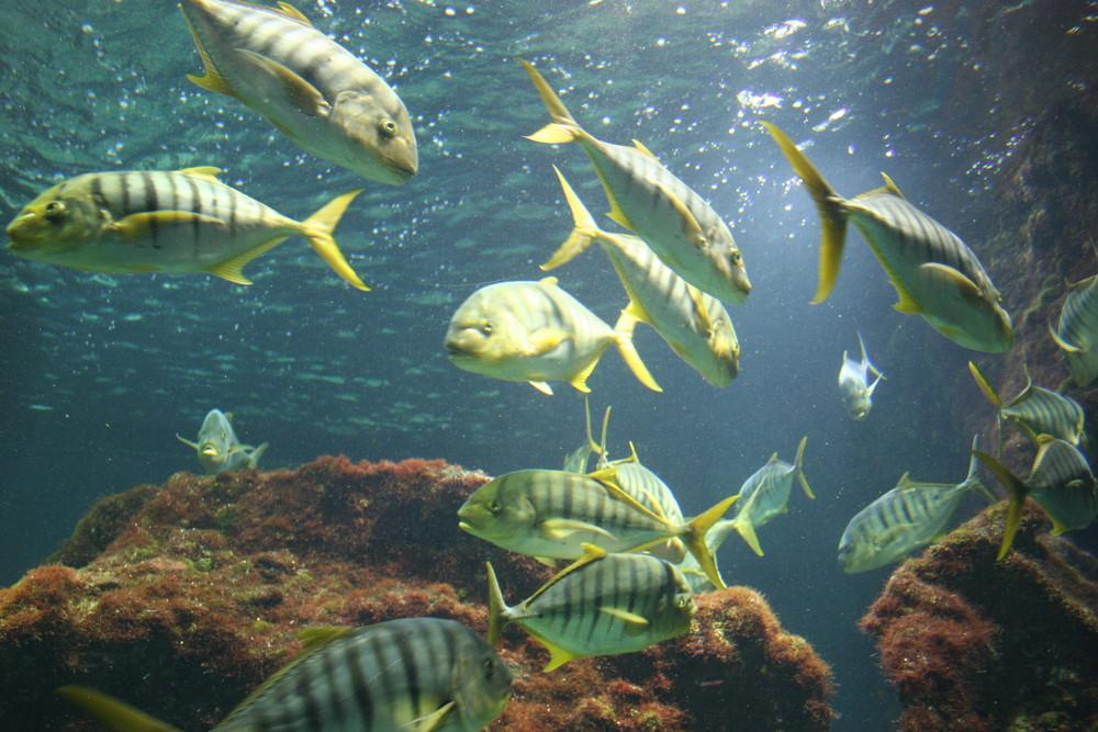 poissons virevoltants, aquarium de la rochelle